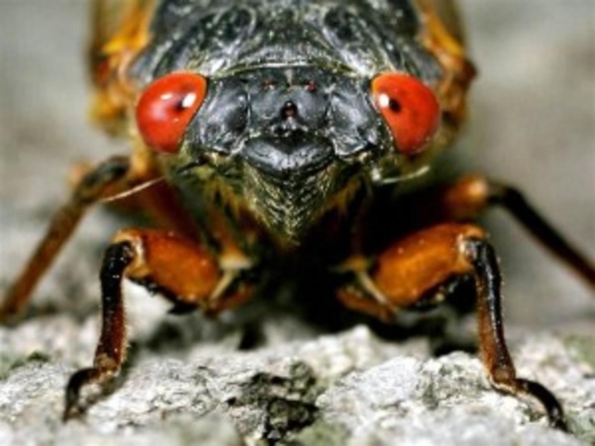 ss-130410-cicada-invasion-tease.660